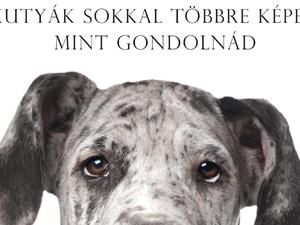 Az egyik legfontosabb, kutyákról szóló könyv – Brian Hare és Vanessa Woods / Az okos kutya