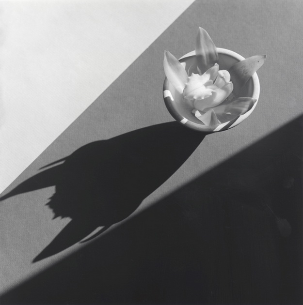 Mapplethorpe2010-1821_Orchid_1987.jpg