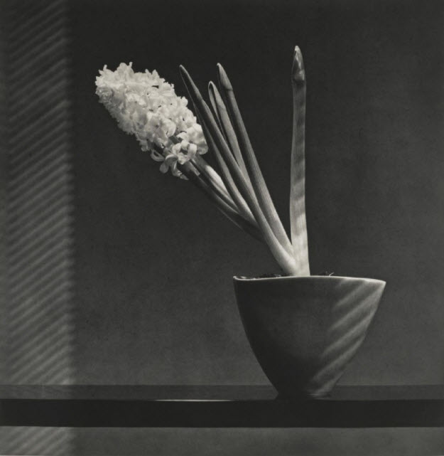 robert_mapplethorpe.jpg