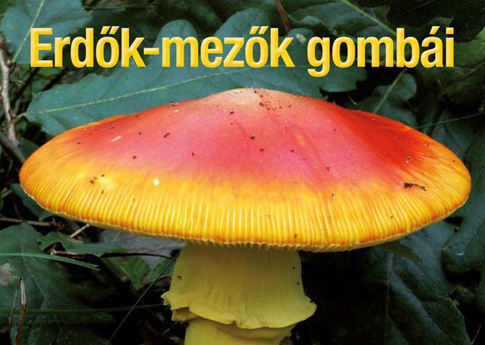 Erdők-mezők gombái