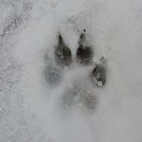 Nem félünk a farkastól! Sőt! Várjuk nagyon…