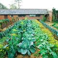 Vegyeskultúrák a zöldséges kertben