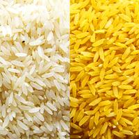 GMO aranyrizs: aranyat ér vagy a sátán eledele?