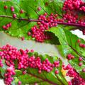 A zöld ötven árnyalata: nyúlkajából ínyencfalat