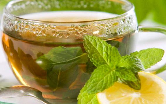 lemon-balm-tea.jpeg
