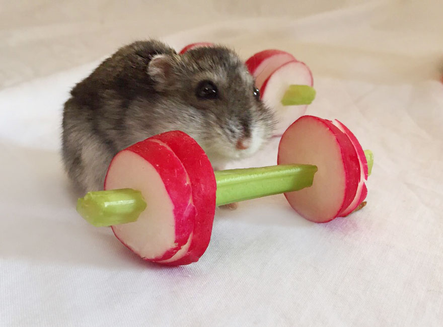 we-made-a-vegetable-gym-for-tiny-hamsters-who-hate-gyming-_880.jpg