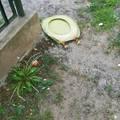 Megoldást szeretnének a közterületi hulladék  problémájára !