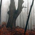 Honvéd János bácsi fája és Tilonka-völgy [08]