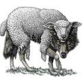 Kik a hamis próféták?