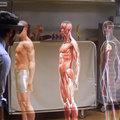 Microsoft Hololens vs anatómia