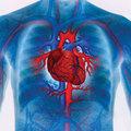 Szív- és érrendszeri megbetegedések megelőzésének legújabb lehetőségei