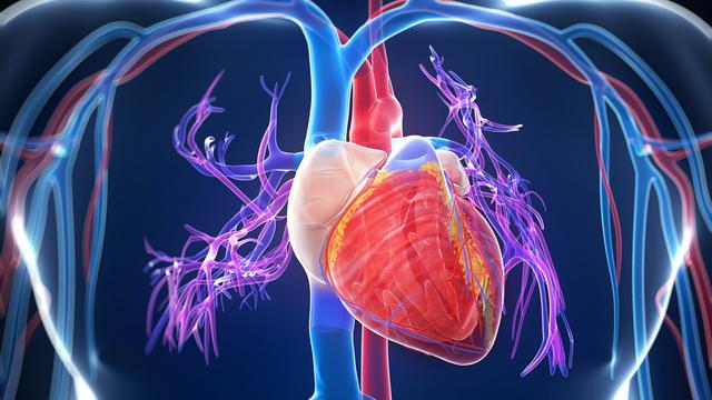 Hogy jut el a vér a testünk legtávolabbi pontjára is, majd vissza?