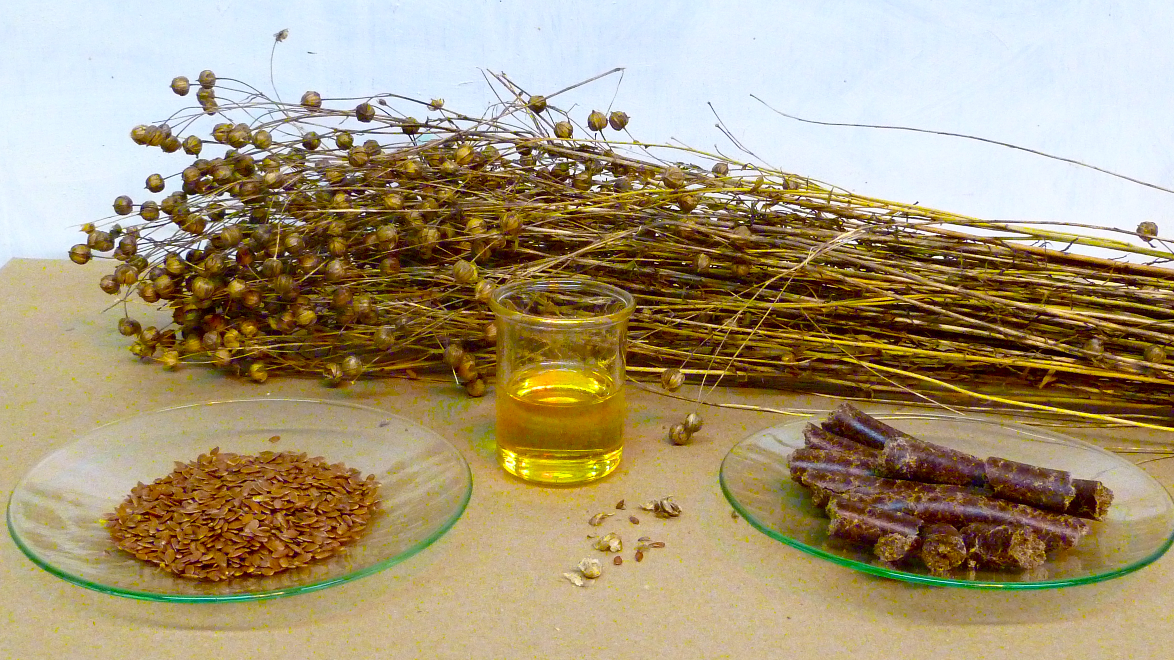 from_flax_to_linseed_oil.JPG