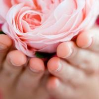 Cserepes vagy vágott virágot adjak anyák napjára?
