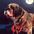 Stephen King : Cujo