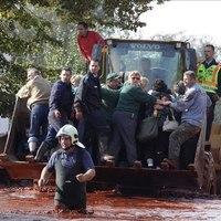 Vörösiszap-katasztrófa. Az első hét krónikája - AJÁNLÓ