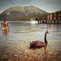 A National Park where you can swim with black swans. Only in NZ. #mertutaznijo #eupolisz #newzealand #lake #swim #blackswan #lakenelson #nationalpark #summer