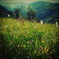 Ezért szeretjük a hegyeket!  #eupolisz #romania #mertutaznijo #alduna #herkulesfurdo #hiking #túra #viragok