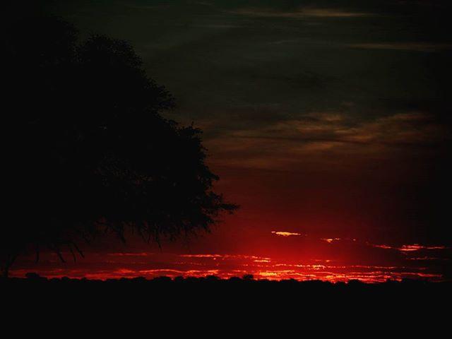 Azok az afrikai naplementék. Those african sunsets. #mertutaznijo #eupolisz #afrika #africa #sunset #savannah #travel #travelphotography #nikon #tree #silhouette #night #bush