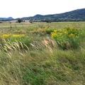 A Mesekavics nyara 2014 - képgaléria / Summer 2014