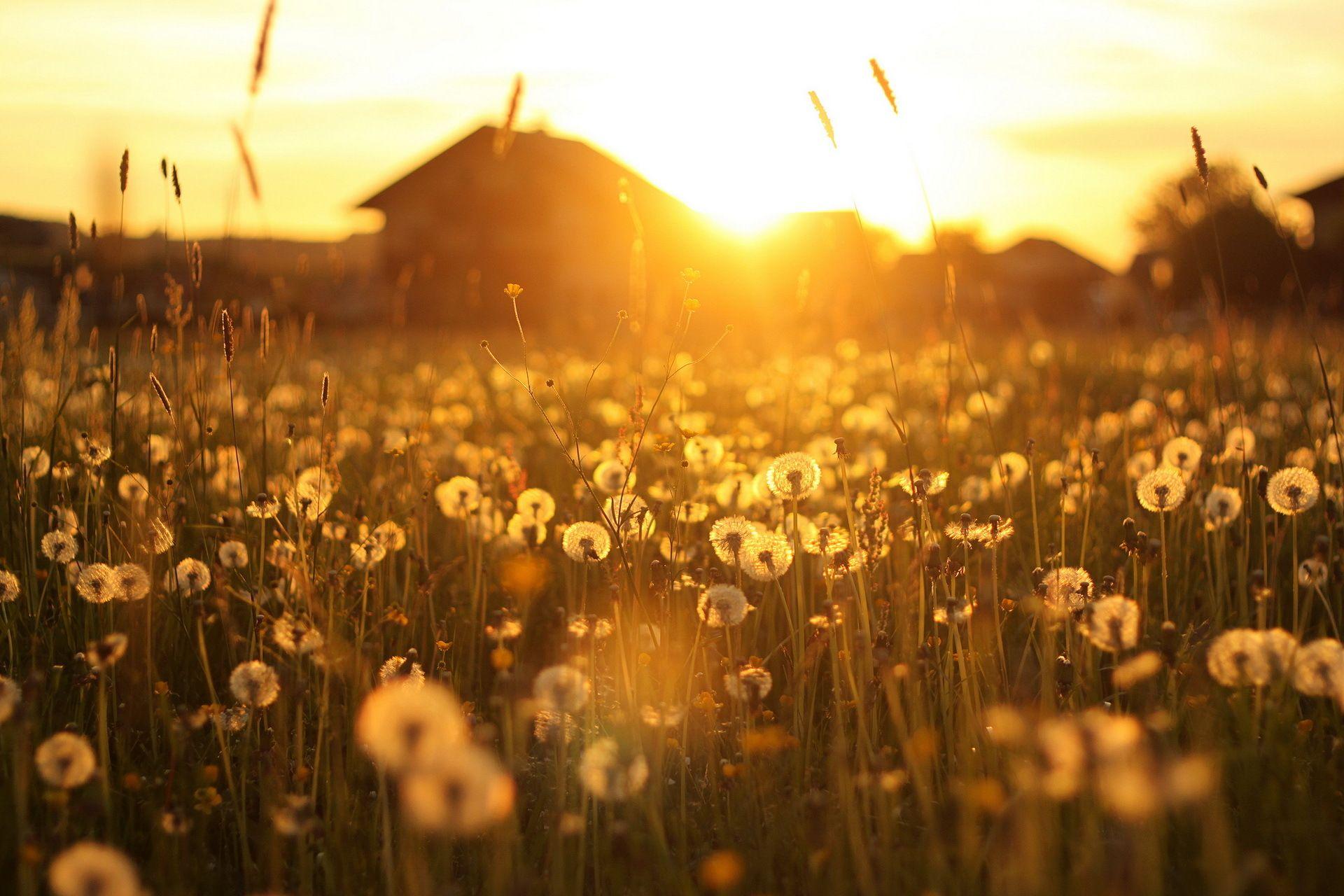 naplemente-a-mezon-tul_-hazak_-leviragzott-pitypang-237048.jpg
