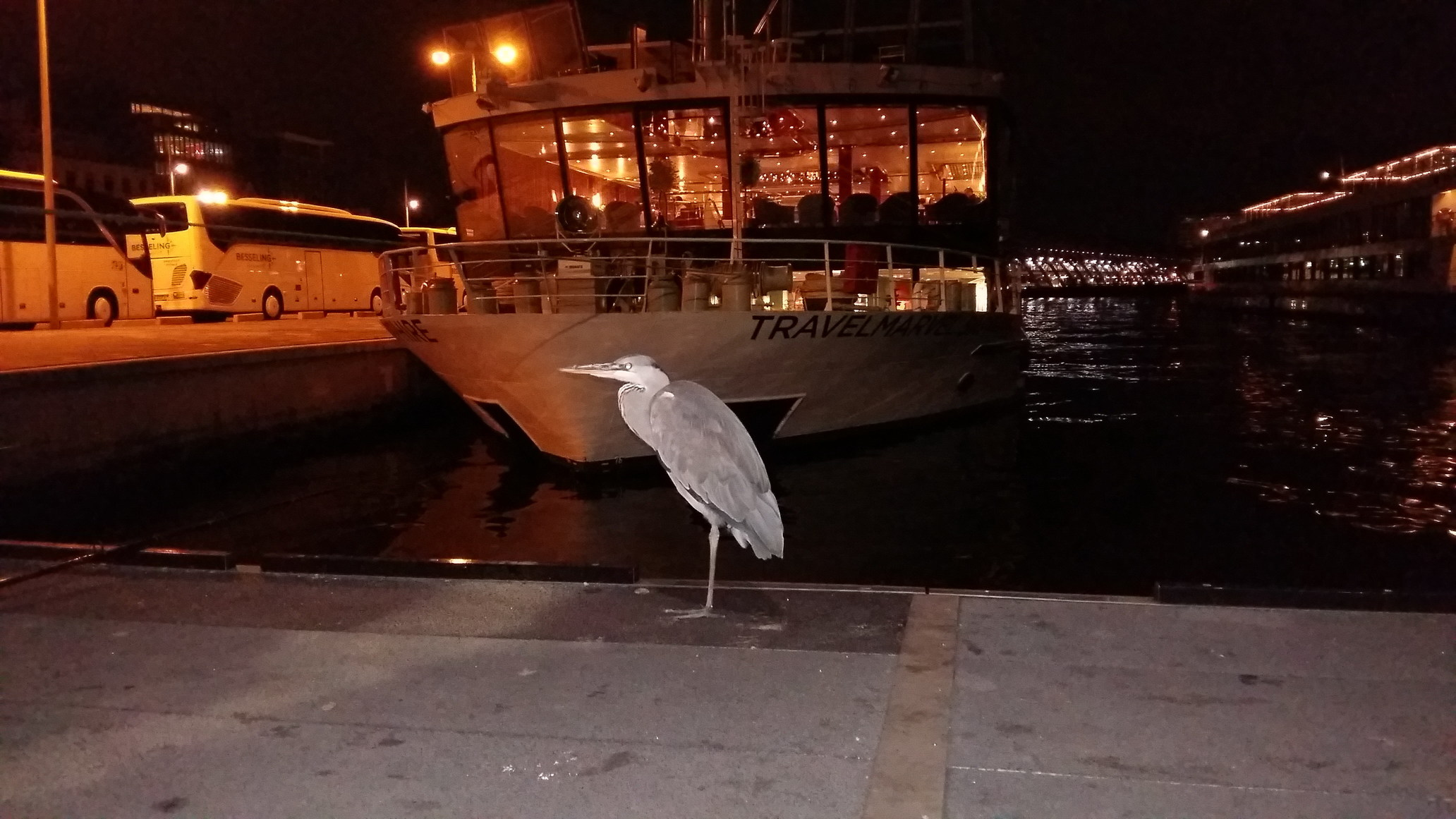 A Bird Waiting at the Amsterdam Docks
