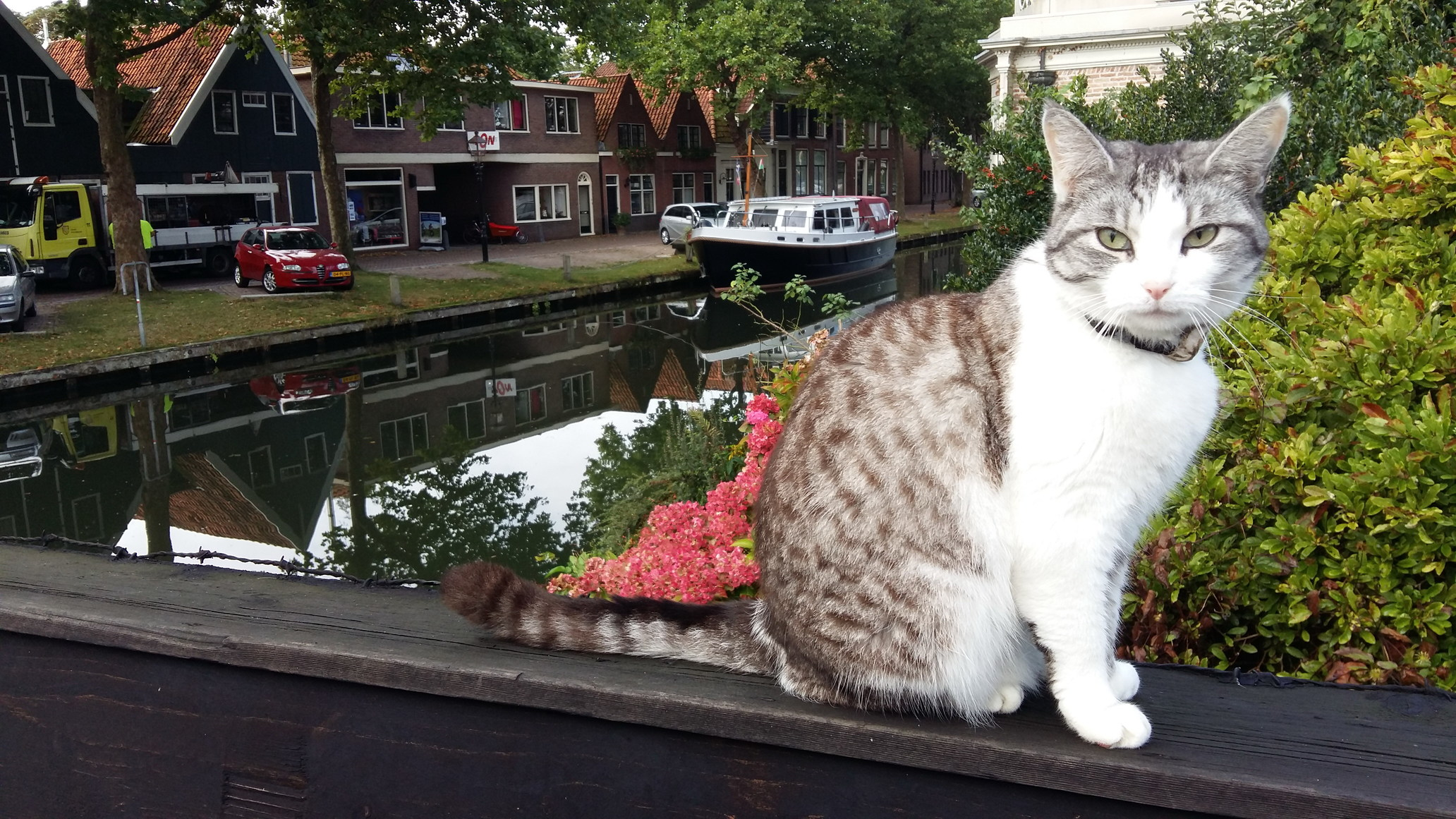 A Local Cat Welcomes Tourists in Edam Holland