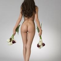 Jázmin és a tulipánok