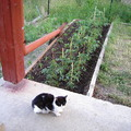 A kis kertem