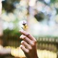A virágok mágikus ereje