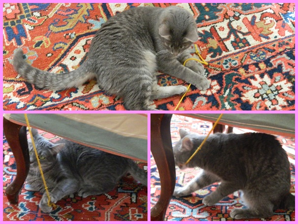 Lizzy playing with string