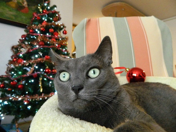 Missy and Christmas tree