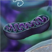 Algák, gyógyszermellékhatások és az evolúció