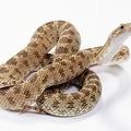 Amikor kígyót melengetsz a kebleden...