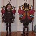 Pávaszemes pillangó