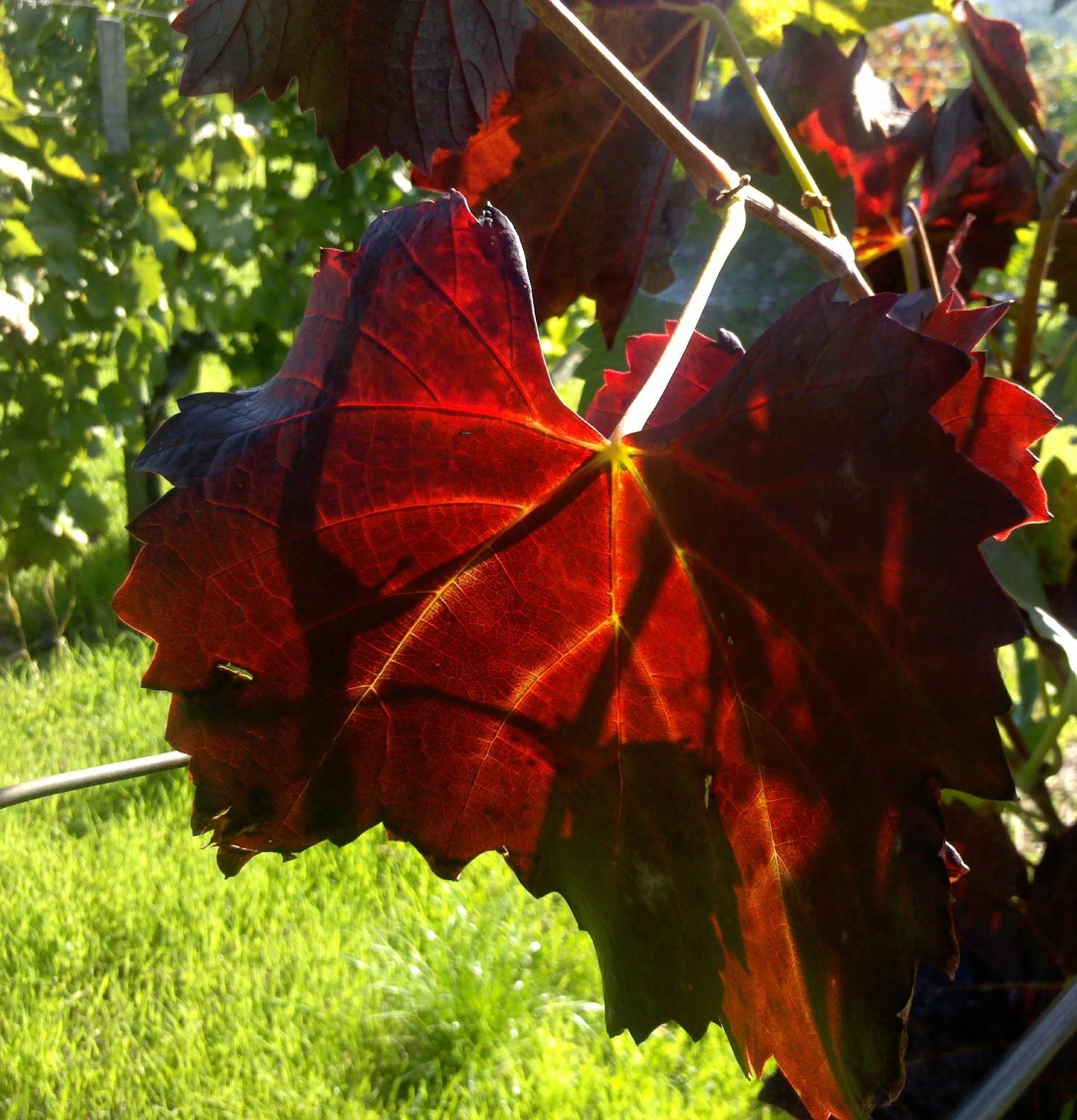 2012-10-20_11-10-19_146.jpg