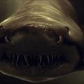 FILM: Cápák éjszakája