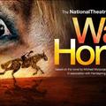 SZÍNDARAB: War Horse