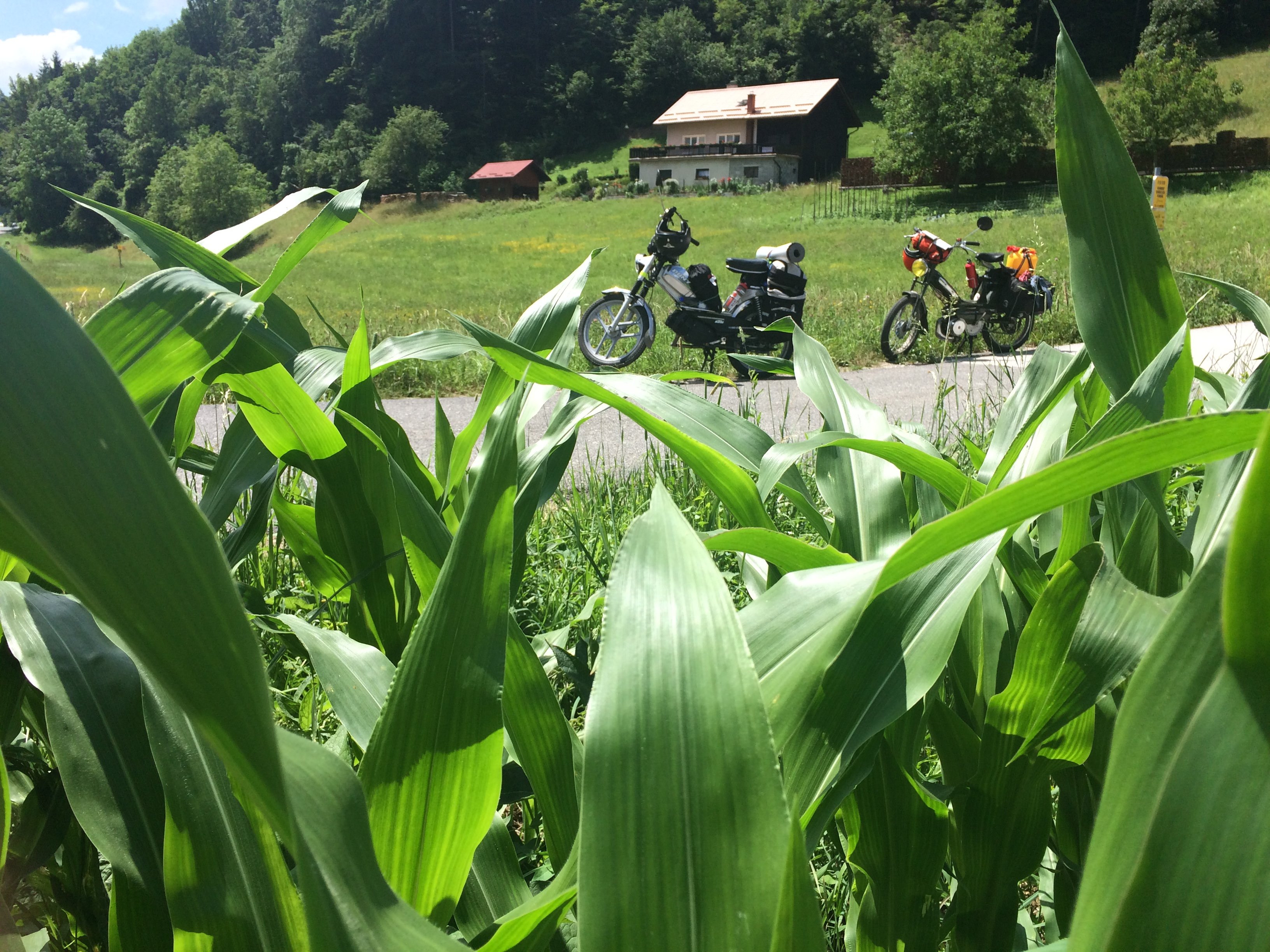 kukoricasban.JPG