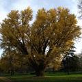 Az év madarát már megválasztottuk, most jön az év fája!