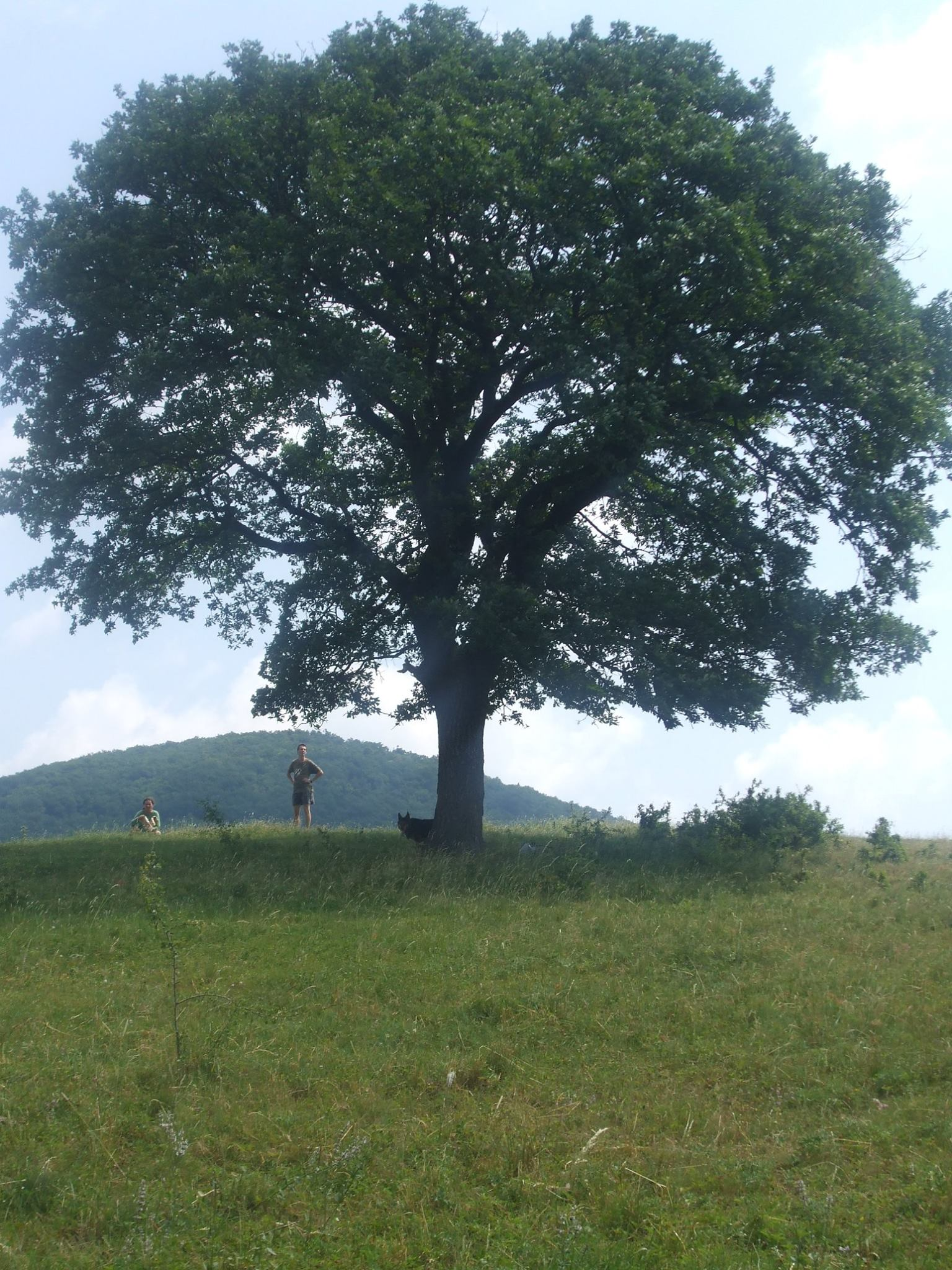 Kóspallag - Tűzoltófa