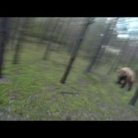 Tekerj, ahogy csak bírsz, ha jön a medve!