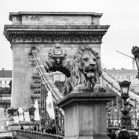 Mi helyzet a Lánchíd oroszlánjaival? Hol a nyelvük?