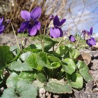 A legszebb kora tavaszi virágok