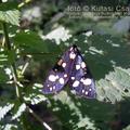 Érdekes rovarok a Pintér-hegyről
