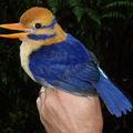 A kutató fogott egy gyönyörű madarat, azután megölte...