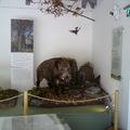 Díjat nyert a gyenesdiási Természet Háza Látogatóközpont kiállítása