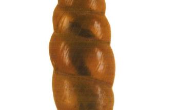 Egy titokzatos csiga nyomában – kalandok albán tájakon, múzeumi gyűjteményben és a laboratóriumban