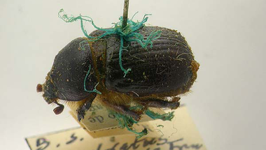 Patinás bogarak avagy páncélba zárt kémia