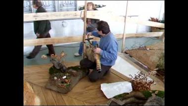 Kiállításépítés: Készülnek az MTM Vadászati Múzeumának diorámái!